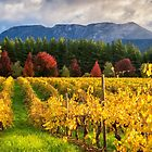 Boynton's Feathertop Winery #5 by Mieke Boynton