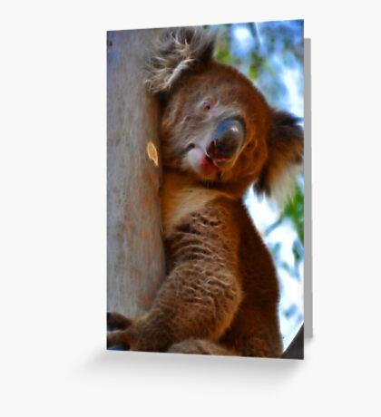 Koala at Bonython Park Greeting Card
