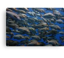 Snappers in shark yolanda reef  Canvas Print