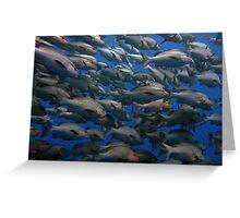 Snappers in shark yolanda reef  Greeting Card