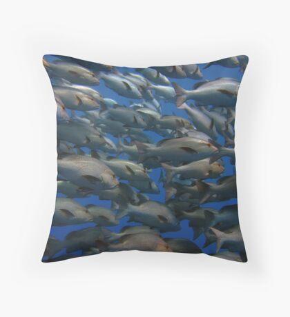 Snappers in shark yolanda reef  Throw Pillow