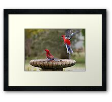 Move Over, or I will land on your head ! Framed Print