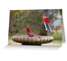 Move Over, or I will land on your head ! Greeting Card