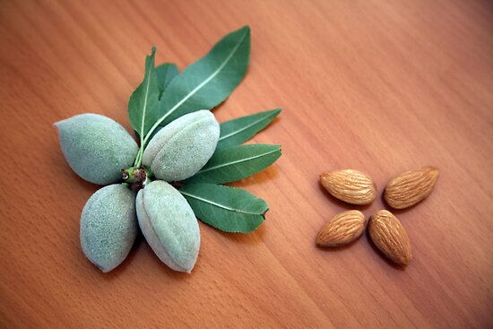 Almonds by Dentanarts