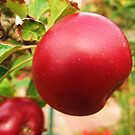 my apple tree by flynny