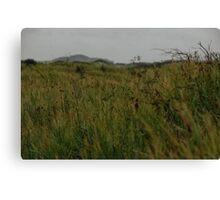 Long grass. Canvas Print