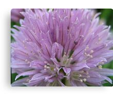 Chives!   Canvas Print