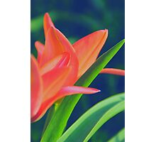 MAGIC FLOWER III Photographic Print