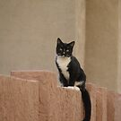 Neighborhood Cat by down23