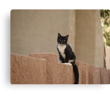 Neighborhood Cat Canvas Print