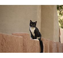 Neighborhood Cat Photographic Print