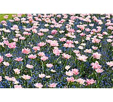 Pink Foxtrot tulips abstract Photographic Print