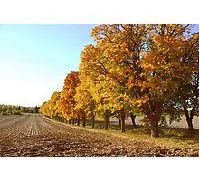 Yellow tree road Photographic Print