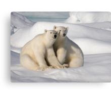 Polar Bear Brothers Metal Print