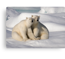 Polar Bear Brothers Canvas Print