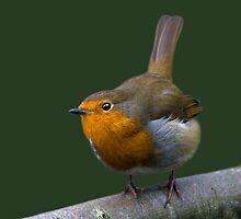 Watch the Birdie! by Krys Bailey