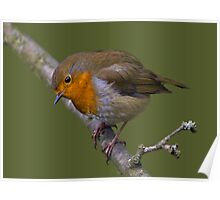 Oh no, not another Robin......... Poster