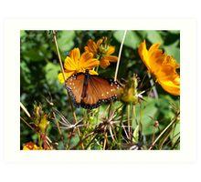 Butterfly in the meadow Art Print