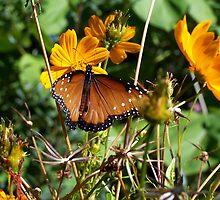 Butterfly in the meadow by John R. Shook