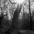 Tree Flare by Melissa  W