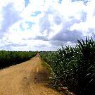 Sugar Cane by Rachel Hoffman