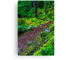 British Columbia Forest Trail Canvas Print