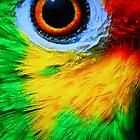 Caribbean Parrot by Carole Brunet