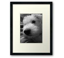 Adorable Nose Framed Print
