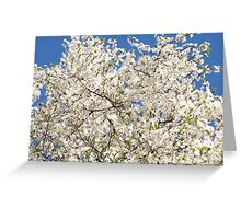 white flowers of Cerasus Greeting Card
