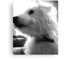 Angel Light Dog Canvas Print