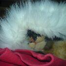 My cat in a hat by Ladymoose