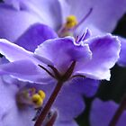 Profile of a Violet by Tammy F