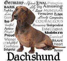 Dachshund Traits by DogLove