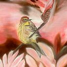 Male Palm Warbler by KenLePoidevin