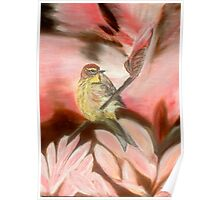 Male Palm Warbler Poster