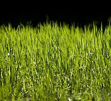 Green fresh bright grass leaves by Arletta Cwalina