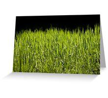 Green fresh bright grass leaves Greeting Card