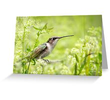 Hummingbird Hiding in Flowers Greeting Card