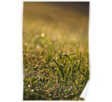 Green fresh grass leaves Poster