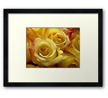 Blushing Yellow Roses Framed Print