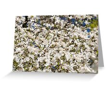 White Magnolia blooming bunch Greeting Card