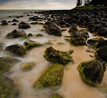 Mist on Moss by Ken Wright