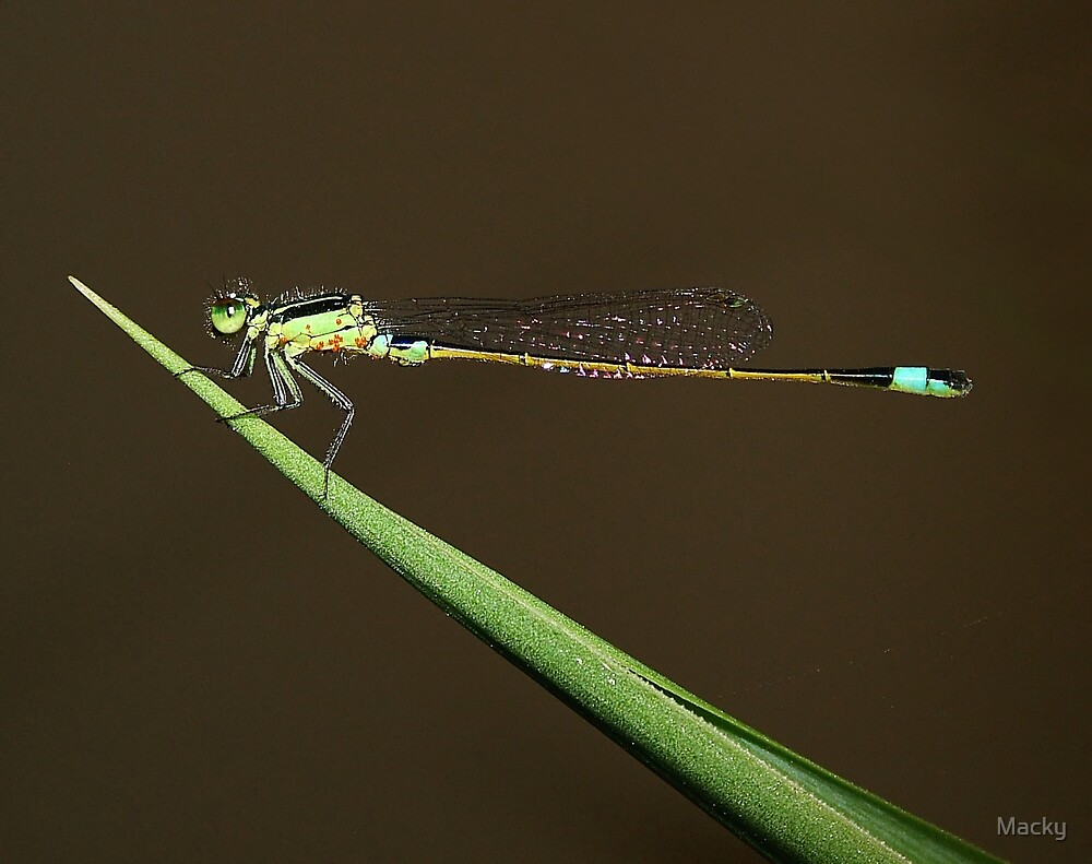 Damsel in Distress (Parasitic Infestation) by Macky