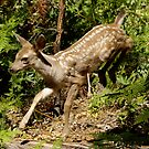 Fawn Leaping from bushes by photoclimber
