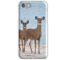 Odocoileus Virginianus - White-Tailed Deer | Rocky Point, New York iPhone Case/Skin