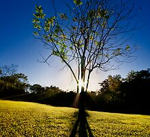 The Sun and the Tree by Jase036