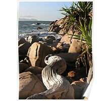 Fish Cove Driftwood Poster