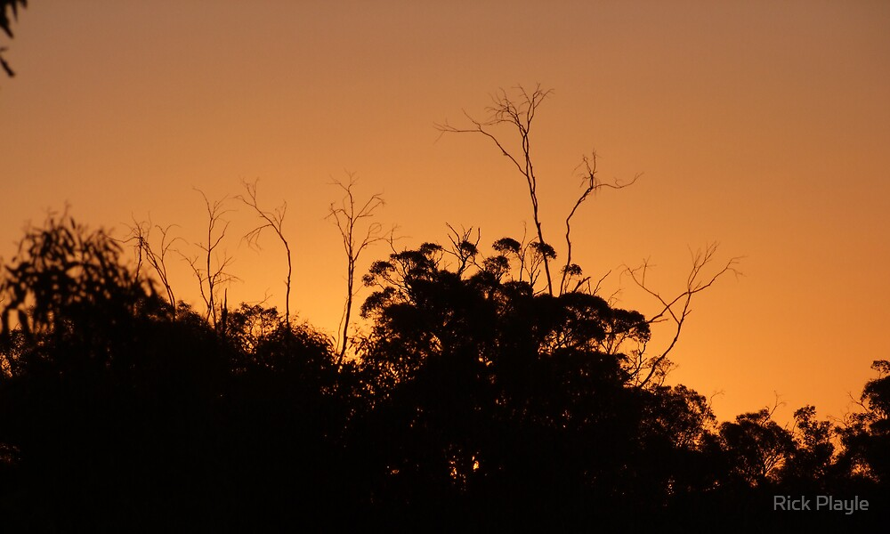 dryandra sunset by Rick Playle