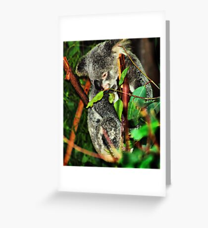 Koala Clinging Greeting Card