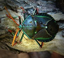 stink bug by Loreto Bautista Jr.